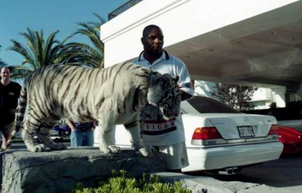 тайсон с тигром